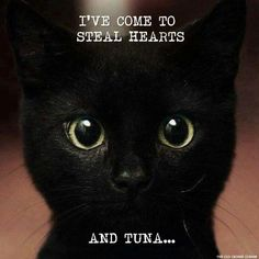 DAMN DAMN DAMN! Little cutie, tell me how many hearts you've got here? Or tuna?