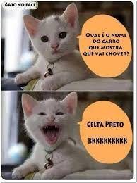 imagens de gatinhos - Pesquisa Google