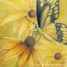 Yellow Swallowtail butterfly on BlackEyed Susan by CaryeVDPMahoney, $15.00
