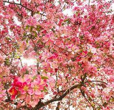 live life in full bloom ✌