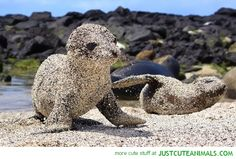 cute-animal-pictures-seal-playing-sand.jpg (580×392)