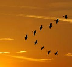 The birds are flying north for the summer.    鳥が夏に向けて北へ帰っている。