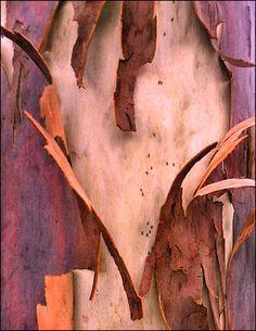 Gum tree bark.  Photography by FalconWriting.com.au  Melbourne, Australia