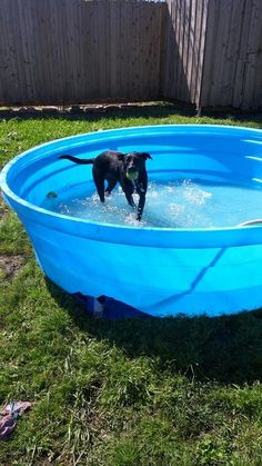 My dog Loves his new pool