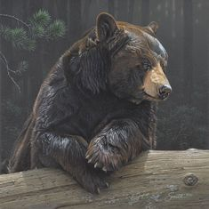 """Details about """"Logging On"""" Daniel Smith Western Fine Art Giclee Canvas – Black Bear Images are generated from high resolution. Bear Paintings, Wildlife Paintings, Wildlife Art, Original Paintings, Daniel Smith Art, Dan Smith, Animal Drawings, Art Drawings, Horse Drawings"""