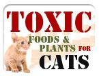 Toxic Food and Plants for Cats || Posted by Jesse Padilla
