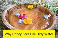 The answer to why honey bees prefer murky water with floaters over the clean and sparkling water you provide for them. Water For Bees, Bee Feeder, Bird Feeders, Bee Friendly Flowers, Butterfly Feeder, Hummingbird Plants, Bee Boxes, Backyard Beekeeping, Hydroponic Gardening