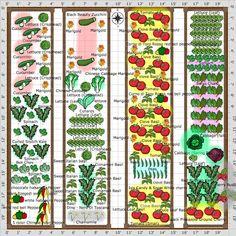 free 20 x 20 vegetable garden plan | Gardening | Vegetable ...