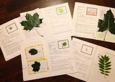 Open ideat: Metsä-teema osa 3