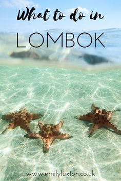 Five Cool Things to do in Lombok, Indonesia. A round up of some of the most fun things to do in Lombok!