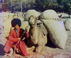 Special delivery: A merchant wearing traditional central Asian dress loads up a camel with sacks, likely containing grain or cotton