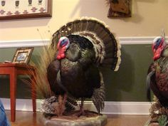 Pictures of Full Turkey Mounts - Georgia Outdoor News Forum
