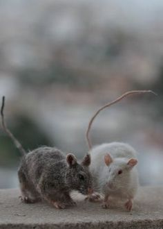 Needle Felted Animal. Rat. Made to order by darialvovsky on Etsy