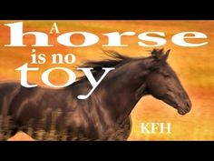 Hempfling - Keeping a horse? A horse is no toy! Horse Training, Horse Love, Ferdinand, Donkeys, Beautiful Horses, Toys, Youtube, People, Movie Posters