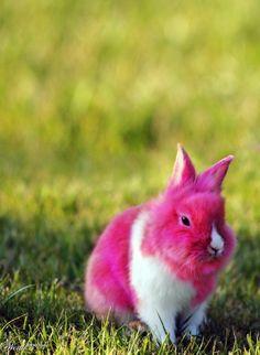 Pink Bunny W.T.F.