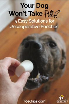 f7b33a752d dog opening mouth to take a pill and title your dog won t take pills  5 easy  solutions for uncooperative pooches