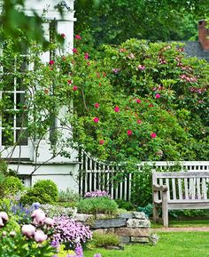 To weave the rock garden and house into the perennial border, homeowner Glen chose an adept climbing rose. - Traditional Home ®/ Photo: Kindra Clineff