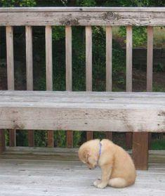 Ohhh buddy, it's ok....