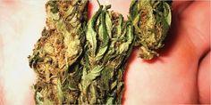 Eating Weed 1 The Big Benefits Of Eating Marijuana Rather Than Smoking It