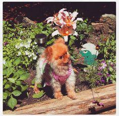 Os 30 Menores Cães Na Terra | PressRoomVIP - Part 13