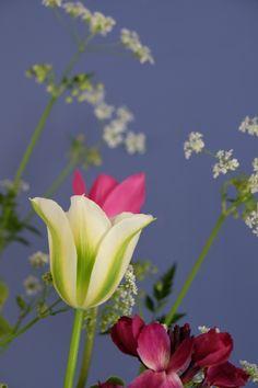 Viridiflora Spring Green tulip #tulip #viridifloratulip Spring Green, Tulips, Bloom, Flowers, Plants, Plant, Royal Icing Flowers, Tulip, Flower