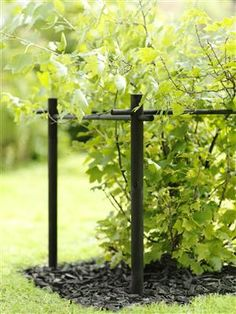 Most Popular Kitchen Garden Design Ideas 30 Herb Garden Design, Love Garden, Dream Garden, Patio Pergola, Greenhouse Gardening, Garden Trellis, Terrace Garden, Garden Structures, Hedges