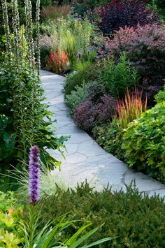plants edging paving