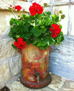 rusty & rustic - galvanised drink cooler with red geraniums - gorgeous