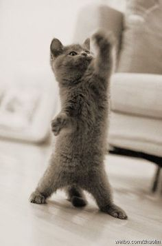 m0r1:  猫拳法の使い手達による華麗な演舞の画像集 - 〓 ねこメモ 〓  Mamotte ageru ♥