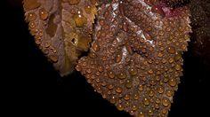 Drops on leaves 3 by Mackingster.deviantart.com on @DeviantArt