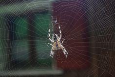 Spinne in einem Netz, Outdoor Outdoor, Scenery Photography, Spiders, Mesh, Outdoors, Outdoor Games, Outdoor Living