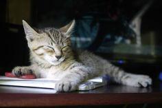 猫を引き取ってから人生楽しすぎwww:キニ速