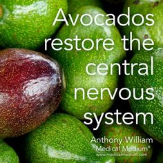 I ❤ Avocados  Restore your Central Nervous System with this food. #healthyliving #food #avocados