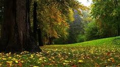 Beautiful Forest Wallpapers 52 Top Free Beautiful Forest Photos For Mac Nature Hd, Autumn Nature, Autumn Forest, Nature Plants, Autumn Trees, Nature Photos, Autumn Leaves, Et Wallpaper, Forest Wallpaper