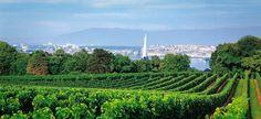 Suisse - les vins du canton de Genève