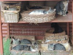 Pet DIY Shelter House Cat Pallets Basket Beds