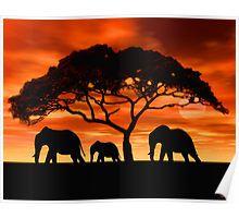 Acacia Elephant Sunset Poster