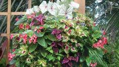 Como controlar y cambiar el color de las Hortensias Cactus, Hanging Baskets, Container Gardening, Home Improvement, Flowers, Interior, Gardens, Home, Daffodils