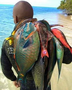 Jamaica fresh fish, just don't eat the parrot fish.they keep our reefs healthy. Puffins Bird, Parrot Fish, Jamaica Travel, Jamaica Jamaica, Caribbean Art, Beautiful Fish, Fish Art, People Of The World, West Indies