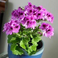 30 Best Fleurs Images Plants Roof Rack Flowers
