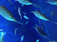 Genoa aquarium #Italy