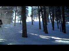 Tree skiing - want to go right now!