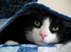 5 Reasons Sharing Your Bed With Your Cat Is Awesome
