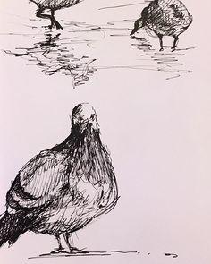 Tonights commute sketch on the #LIRR #commuterlife #urbanwildlife #pigeon #canadagoose #illustration #penandink #birdart #drawing #sketchbook