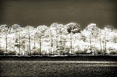 Infared Fine Art Photograph of Morning on Moon Lake.