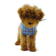 GOGO Mesh Dog Harness Vest, Adjustable Dog Harnesses And Leashes Cyber Monday Deals, Dog Harness, Back Strap, Large Dogs, Mesh Fabric, Pet Supplies, Vest, Teddy Bear, Prints