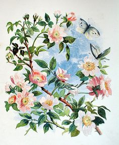 Wild roses, plate in Thomas Miller's 'Common wayside flowers' (1860)