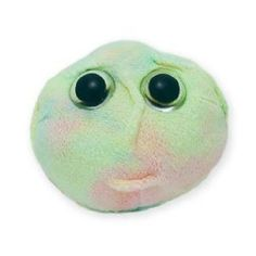Giant Microbes Stem Cell (Hematopoietic Stem Cell) $8.97