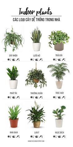 Indoor-plants