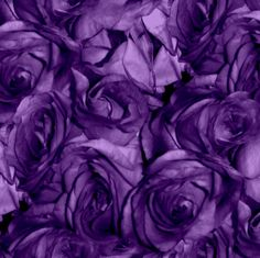 Royal Roses by peacoquettedesigns on Spoonflower